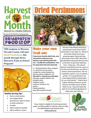 newsletter about persimmons with words and pictures